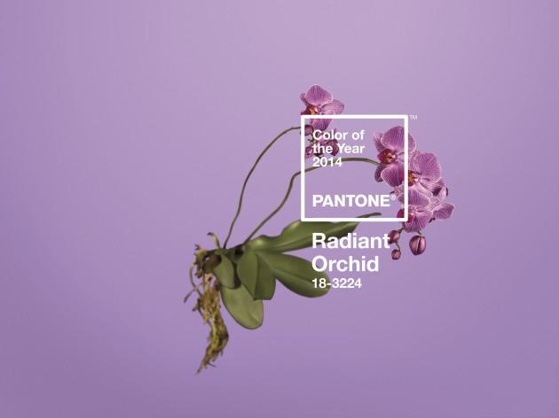 PANTONE 2014'ÜN RENGİNİ AÇIKLADI: ORKİDE MORU