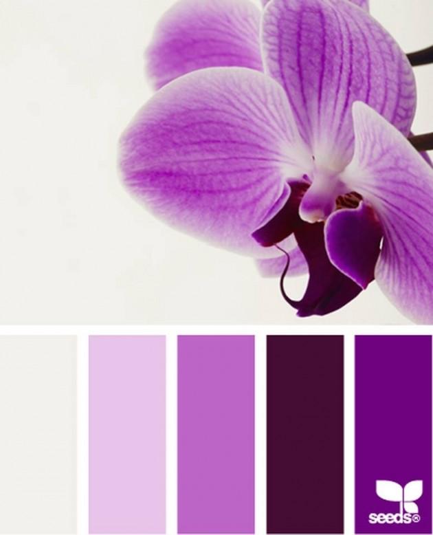 Orkidenin ihtişamı