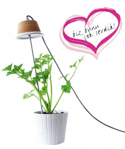EKO-DEKO:  Işıklar içinde büyüsün!