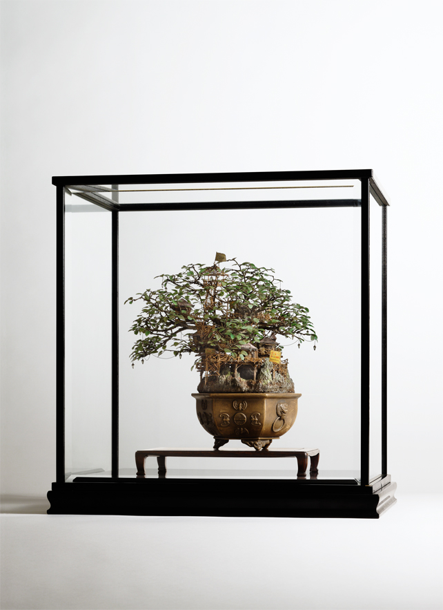 1_Aiba_Bonsai-A_view21